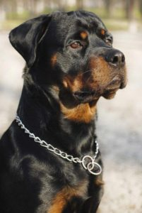Best Watch Dog Breeds