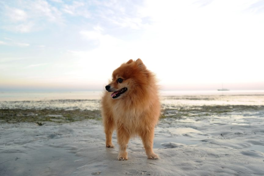 Dog-Misbehave-training-tips