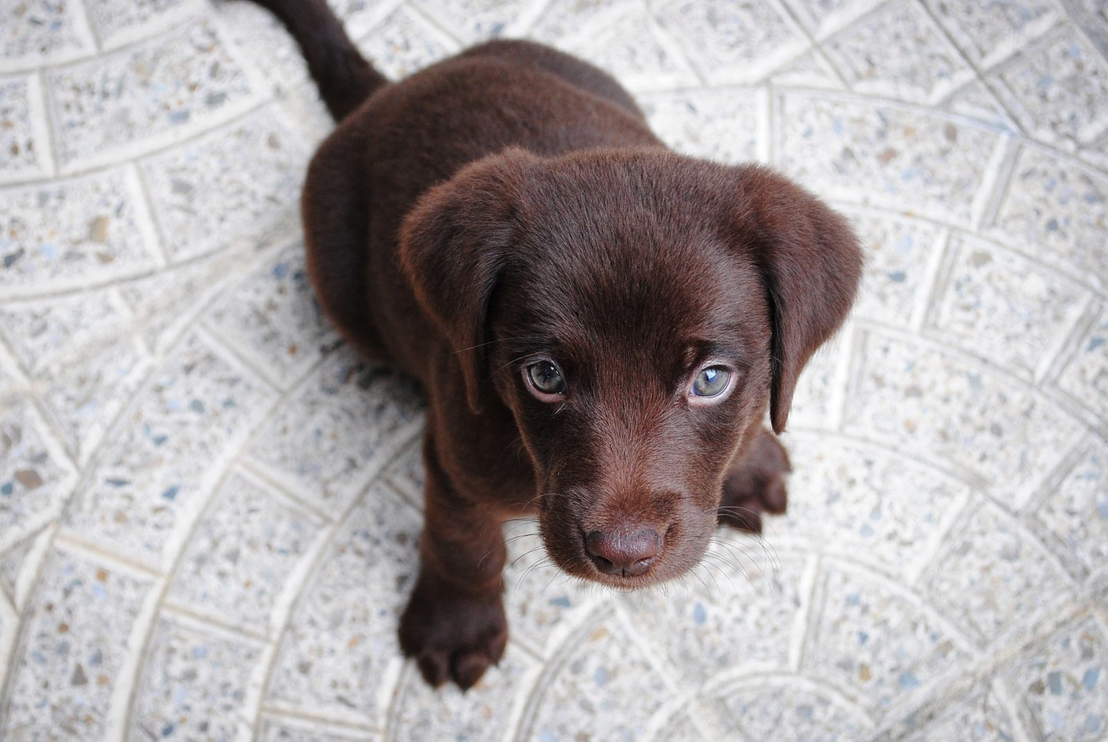 puppy-begging-for-food