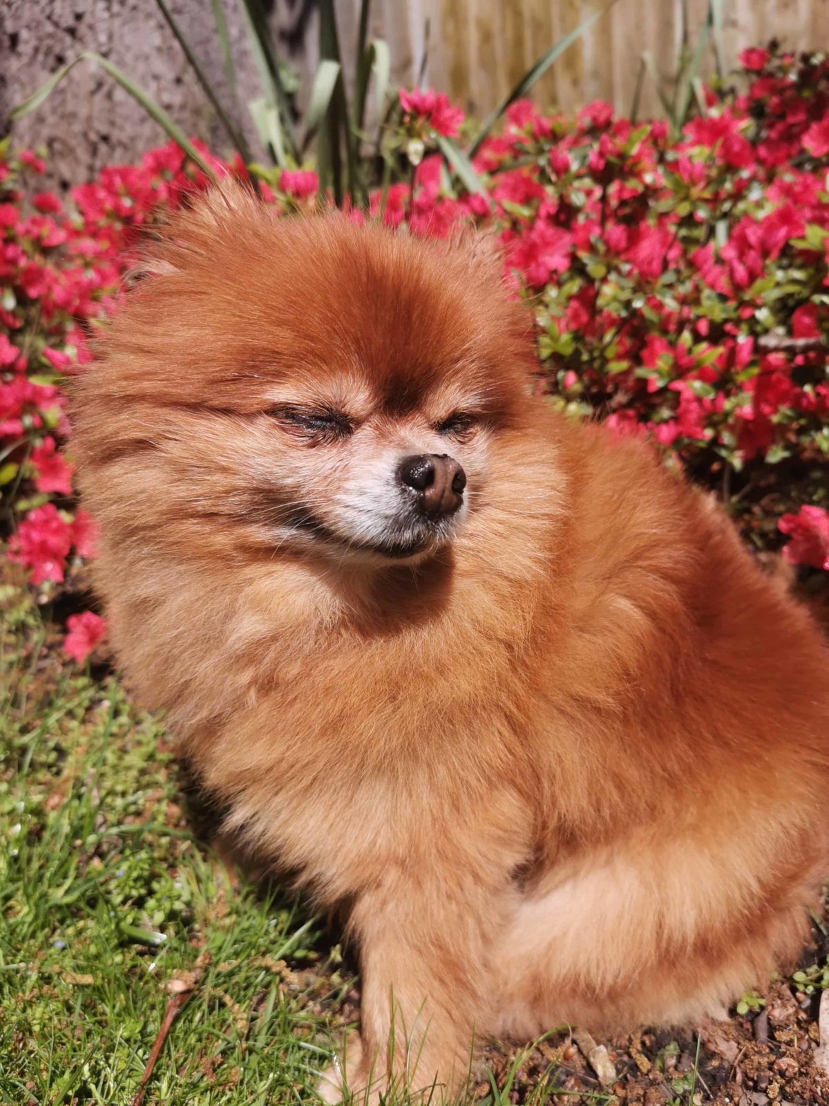 brown pom with wind