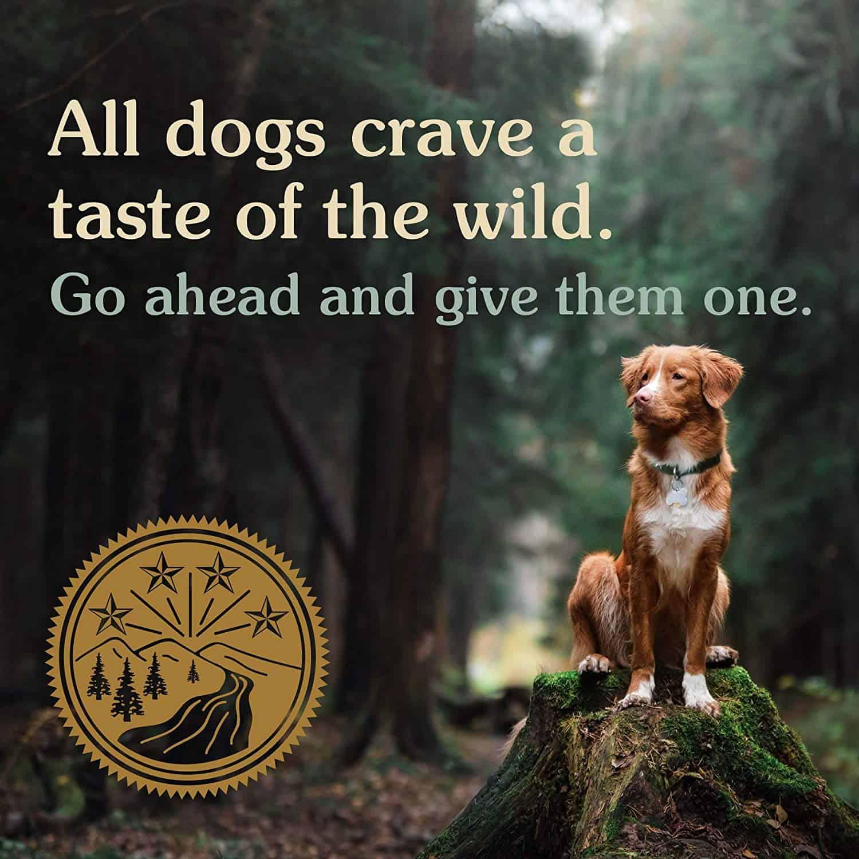 Best-dog-food-pomeranian