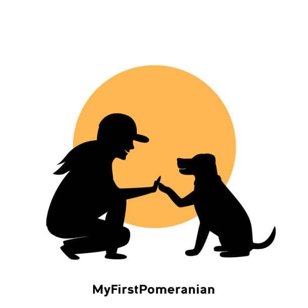 dog-traning-MyFirstPomeranian