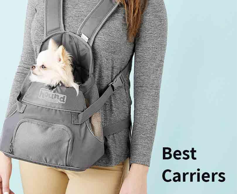 best-carrier-pomerainan