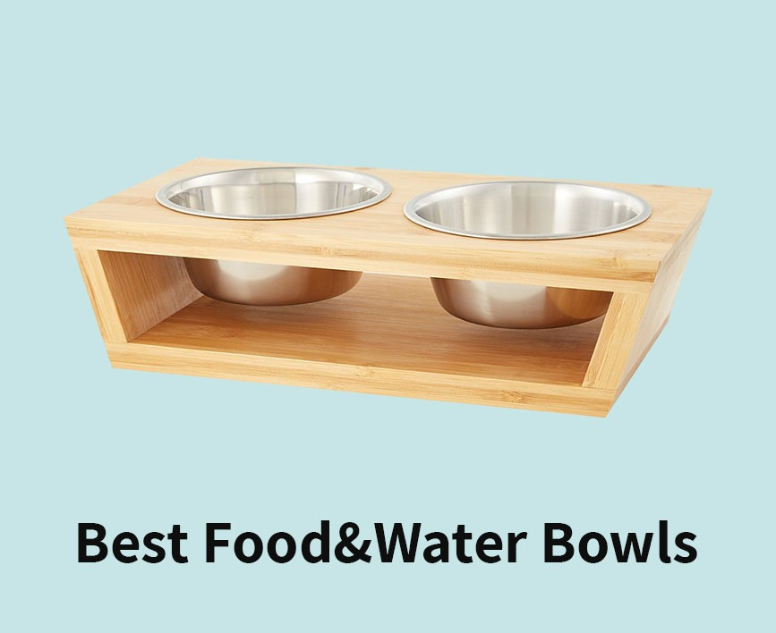 best-food-bowls-for-pomeranian